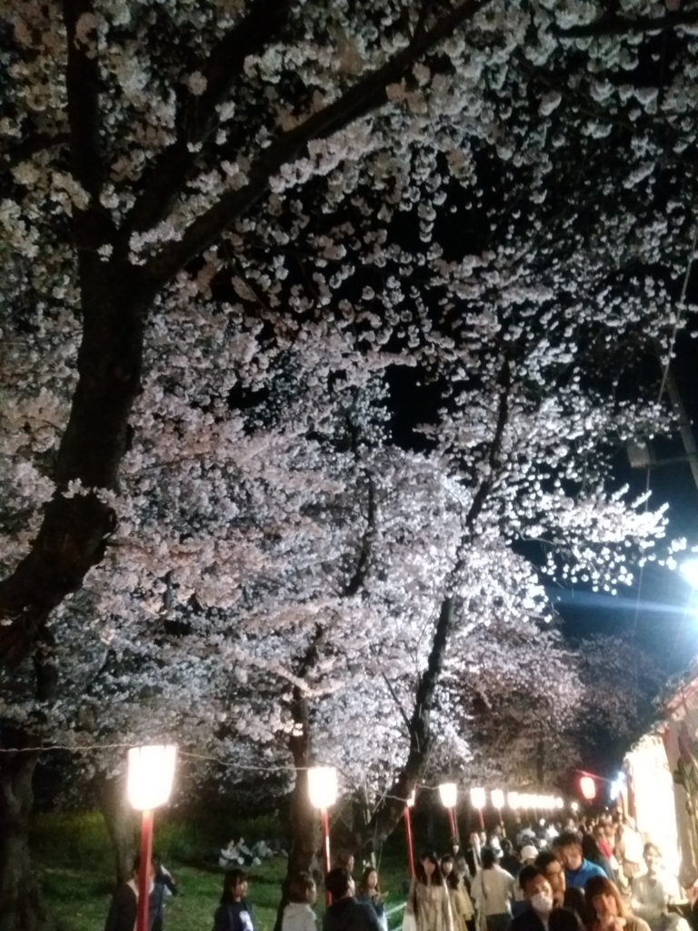 熊谷桜堤 3月27日の開花状況4