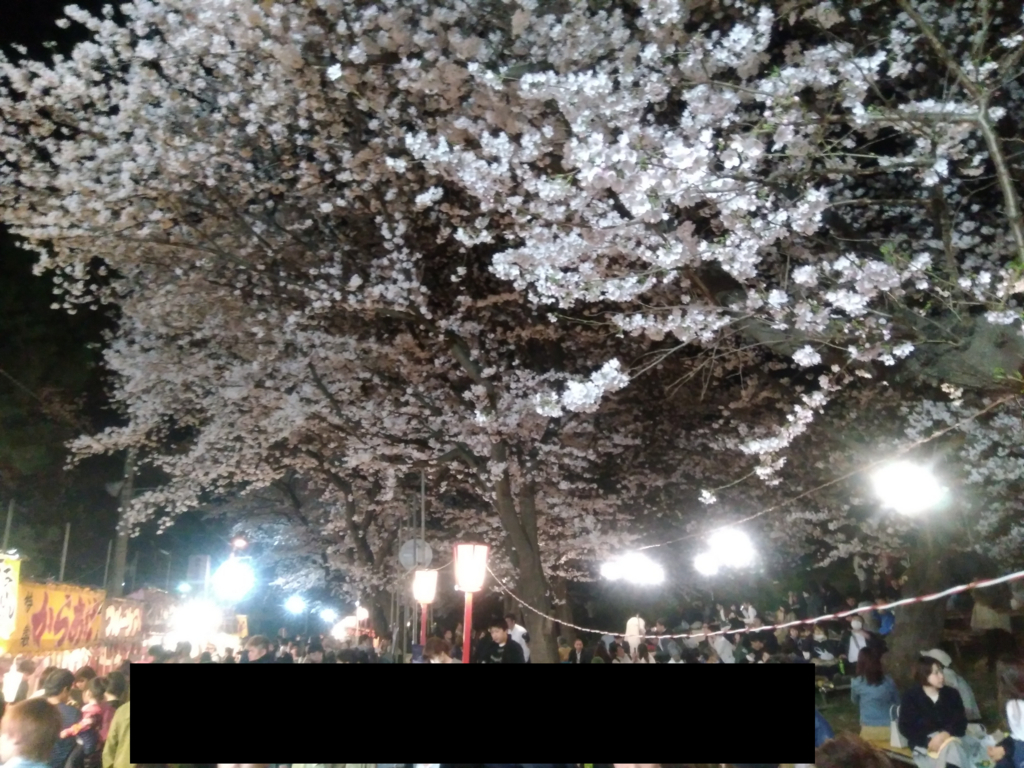 熊谷桜堤 3月27日の開花状況3