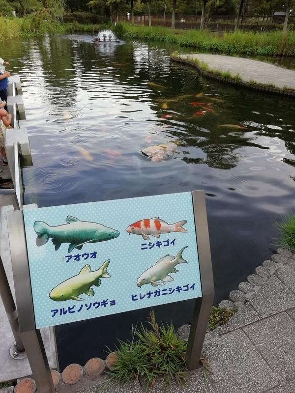 さいたま水族館の屋外の生き物