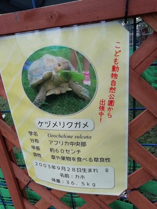 さいたま水族館のケヅメリクガメ