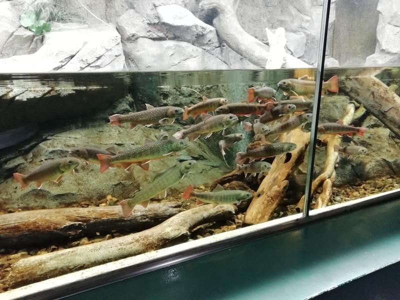 さいたま水族館常設展示