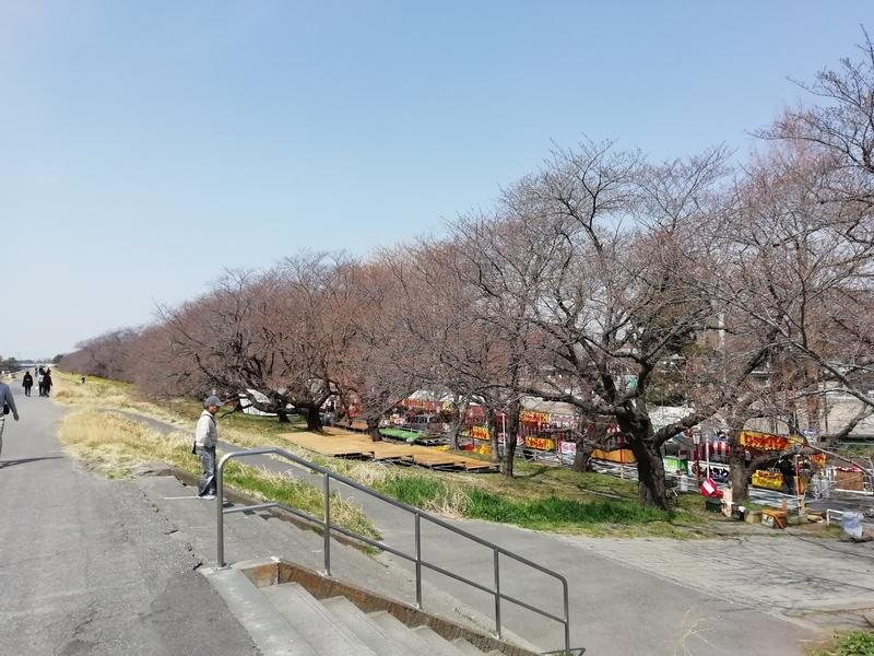熊谷桜堤の様子@2019年3月25日