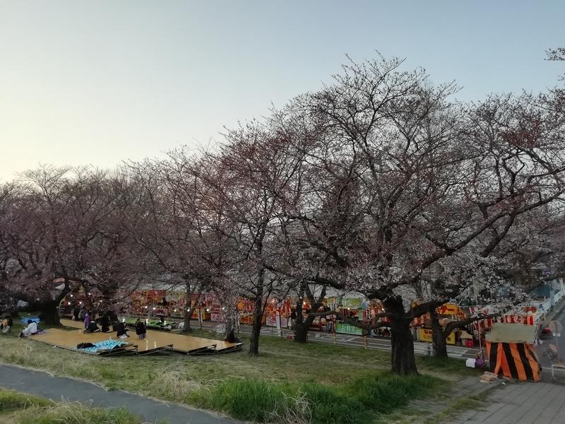 熊谷桜堤の開花状況@2019年3月29日