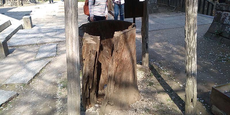 f:id:gajuwo:20190408001304j:plain
