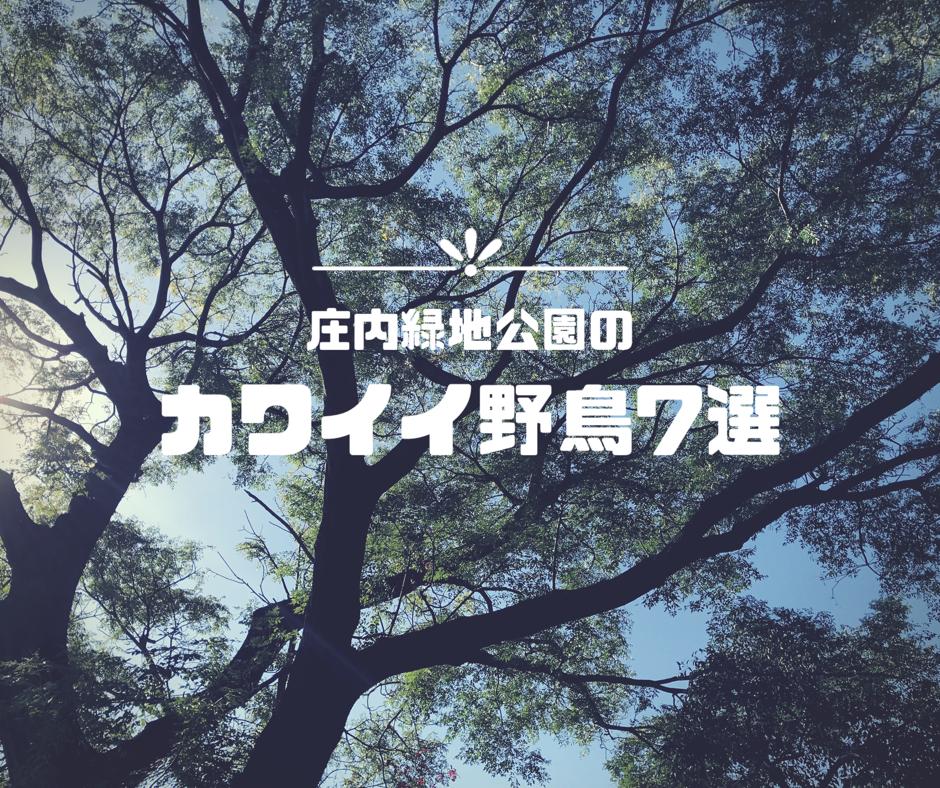 f:id:gakigaki077:20181103224922p:plain
