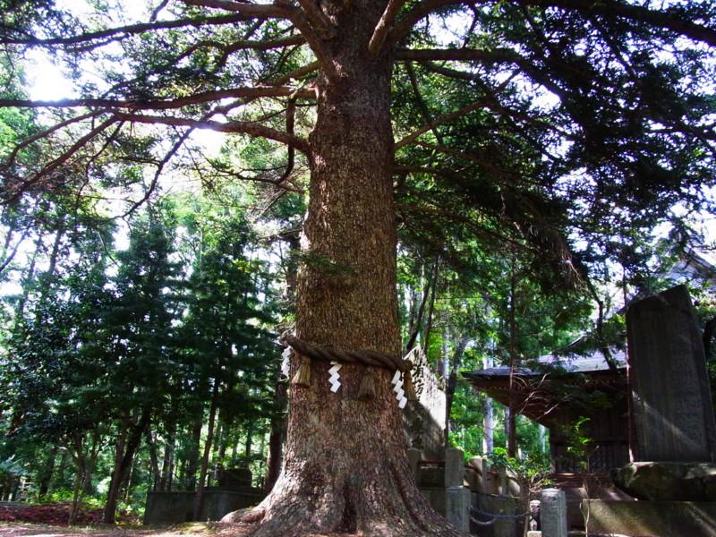 f:id:gakigakiga:20120514143344j:image