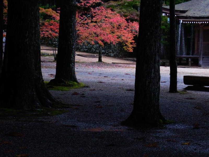 f:id:gakigakiga:20121018125003j:image