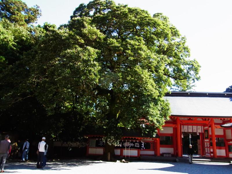 f:id:gakigakiga:20121019142345j:image