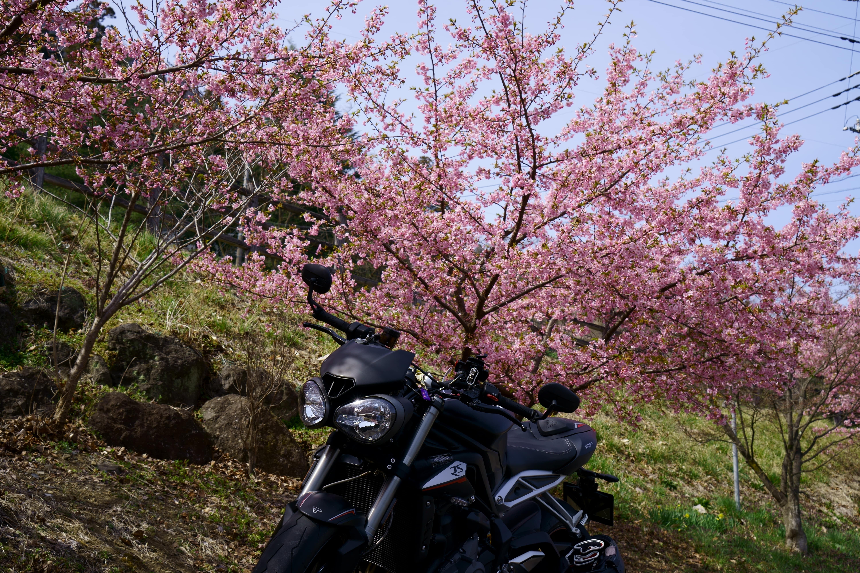 f:id:gaku-bikelife:20190401150307j:plain