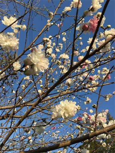 f:id:gaku-fleur296:20170404225942j:image