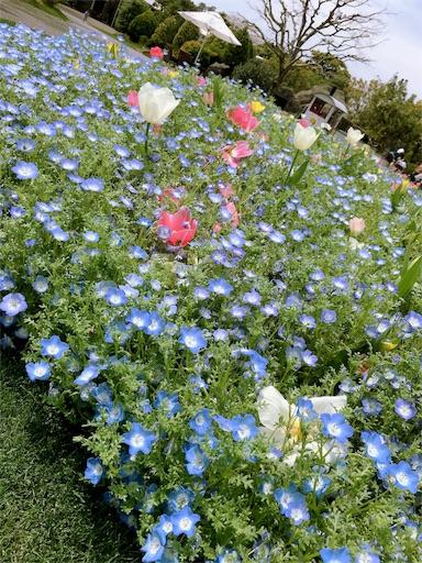f:id:gaku-fleur296:20170412225424j:image