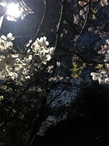 f:id:gaku-fleur296:20180401214032j:image