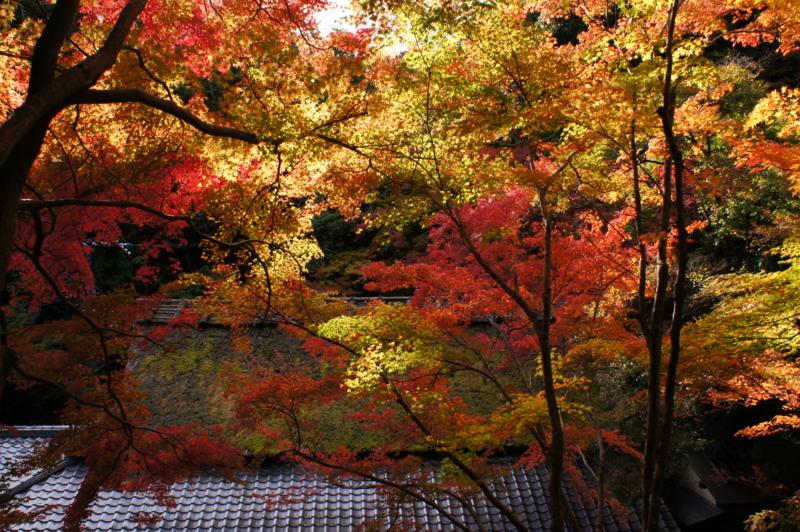 f:id:gaku226:20121110143152j:image