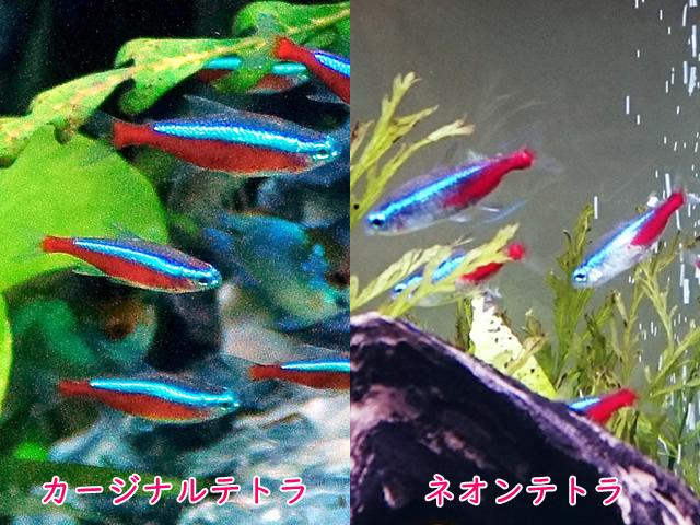 f:id:gaku_001:20180813124802j:plain