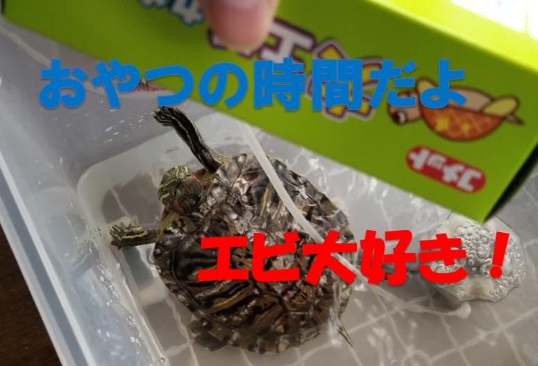 ヨモギ 亀 おやつ
