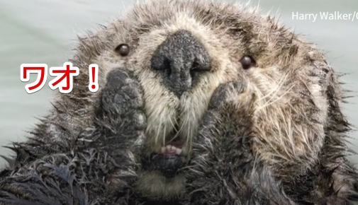 2019】コメディ野生動物写真賞の最終候補が決定したけどコレ