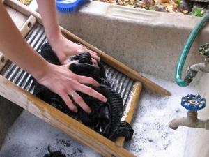 洗濯板で洗濯する人
