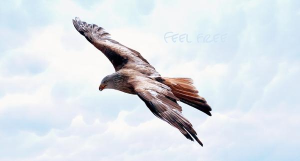 自由の風に乗って羽ばたく鳥