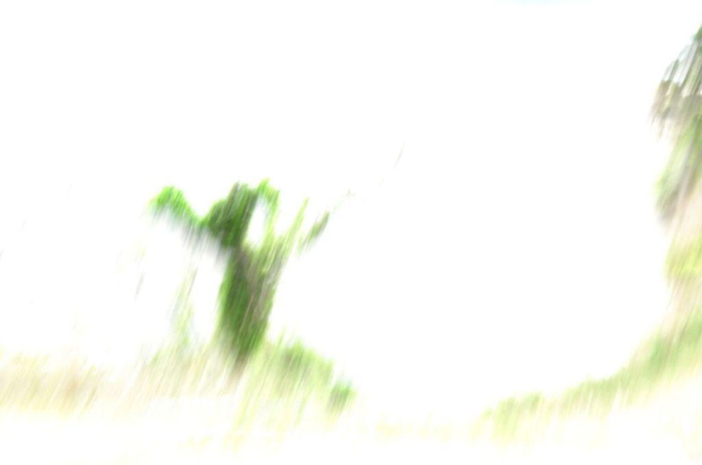 f:id:gallery-silencio:20180621020030j:plain