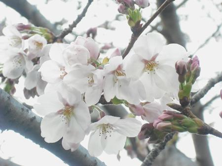 f:id:gallerymain_nakazawa:20110327162204j:image