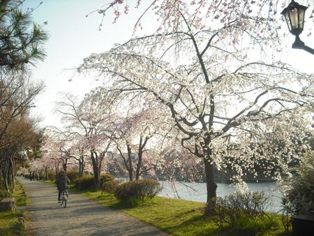 f:id:gallerymain_nakazawa:20110327163457j:image