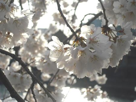 f:id:gallerymain_nakazawa:20110327163544j:image