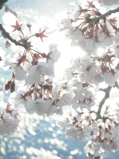 f:id:gallerymain_nakazawa:20110327170705j:image