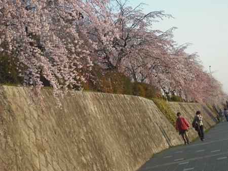 f:id:gallerymain_nakazawa:20110327172823j:image