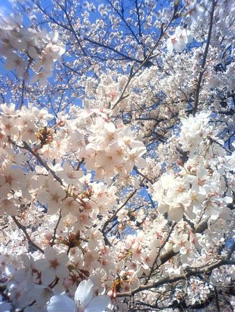 f:id:gallerymain_nakazawa:20110407135100j:image