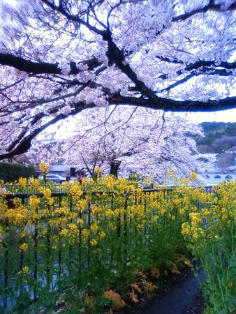 f:id:gallerymain_nakazawa:20110409124400j:image