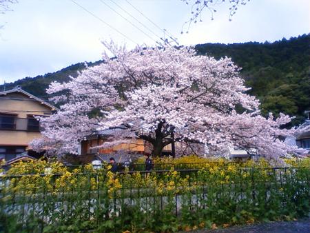 f:id:gallerymain_nakazawa:20110409132200j:image