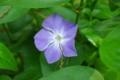 [植物園][花]