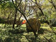 呼吸する庭3