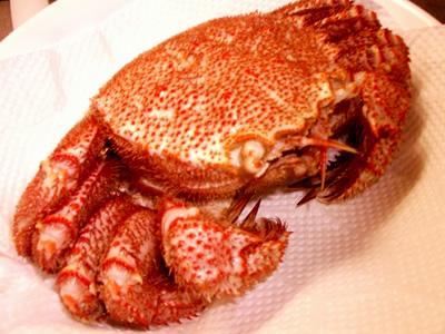 どうぶつの森で学ぶ毛蟹のオモシロ雑学
