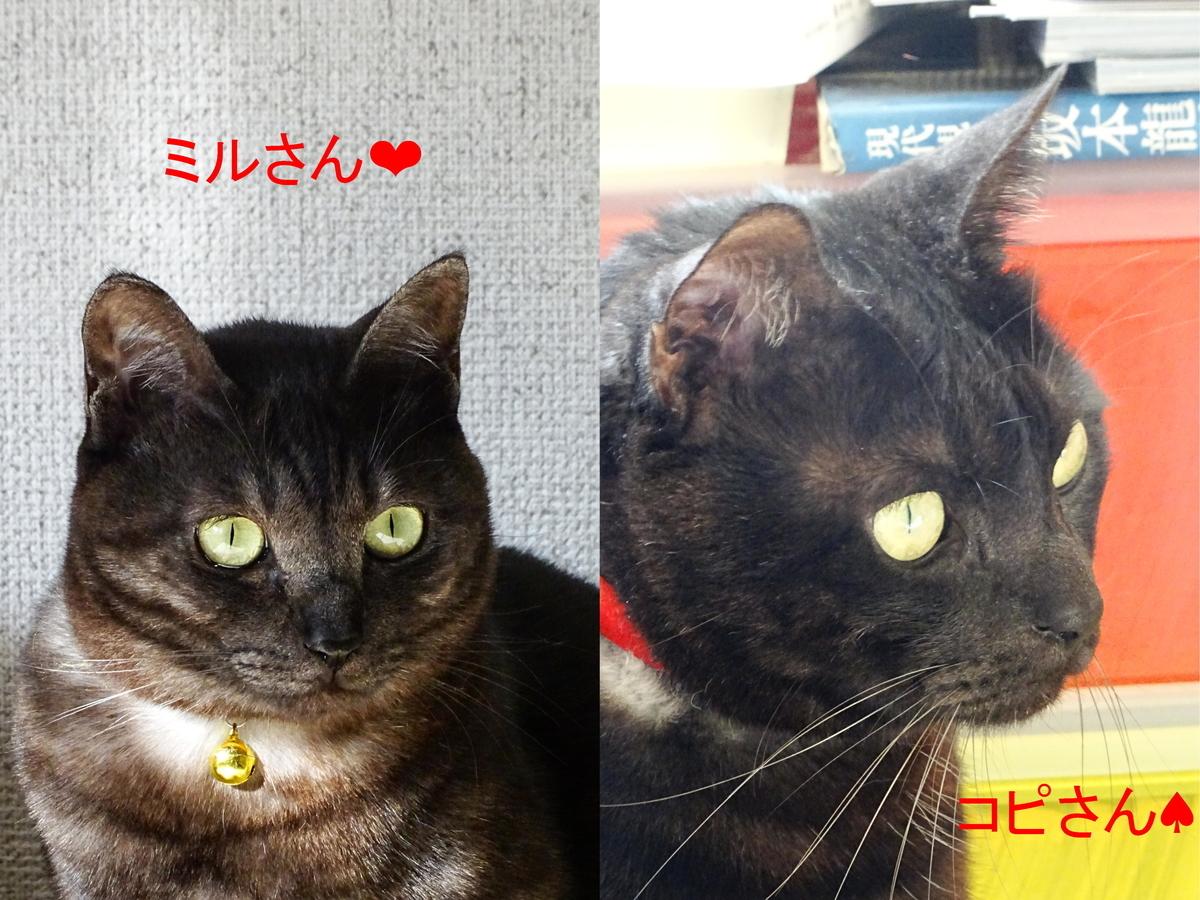 f:id:gan_jiro:20191221100412j:plain