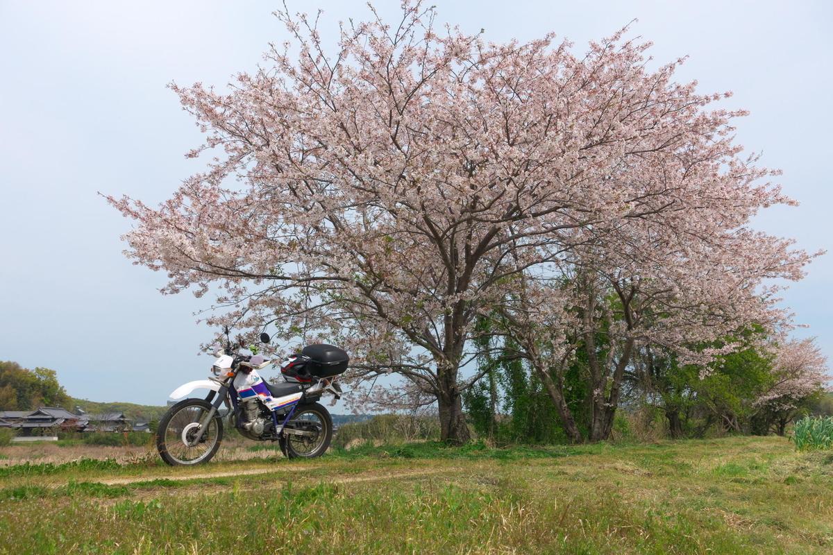 f:id:gan_jiro:20200411133642j:plain