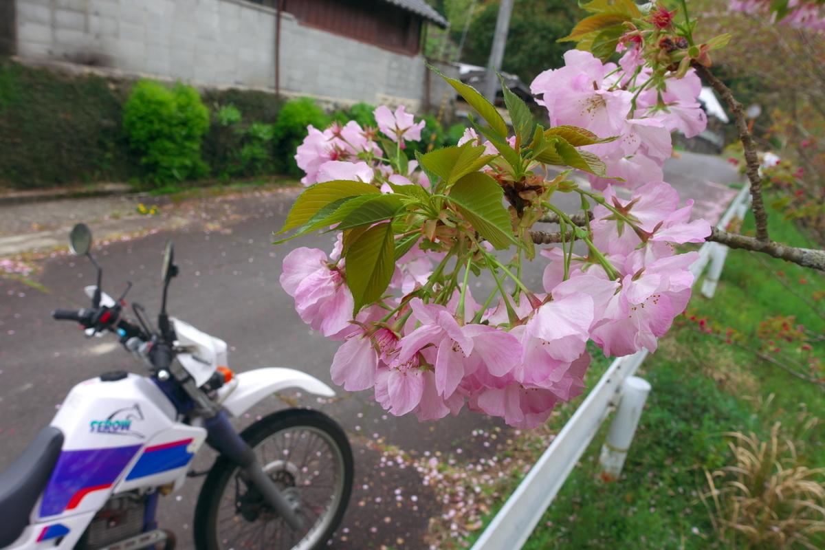 f:id:gan_jiro:20210406112443j:plain