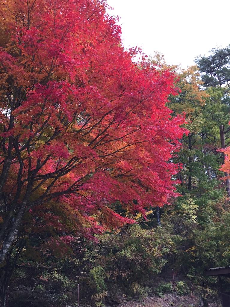 f:id:ganba-takashi:20181031210242j:image