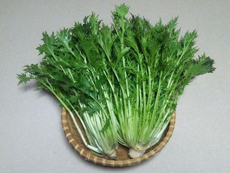 ミズナ 水菜