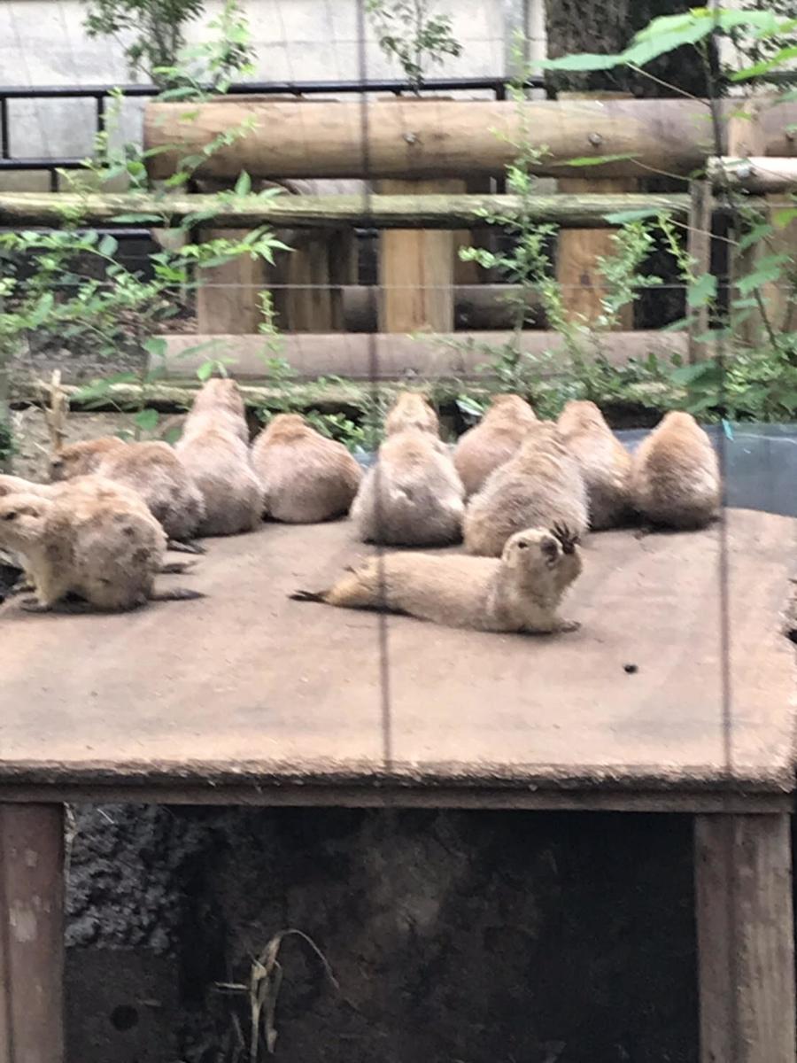 プレーリードッグ 上野動物園