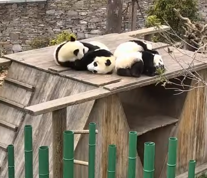 Happiness Village Baby Panda Park