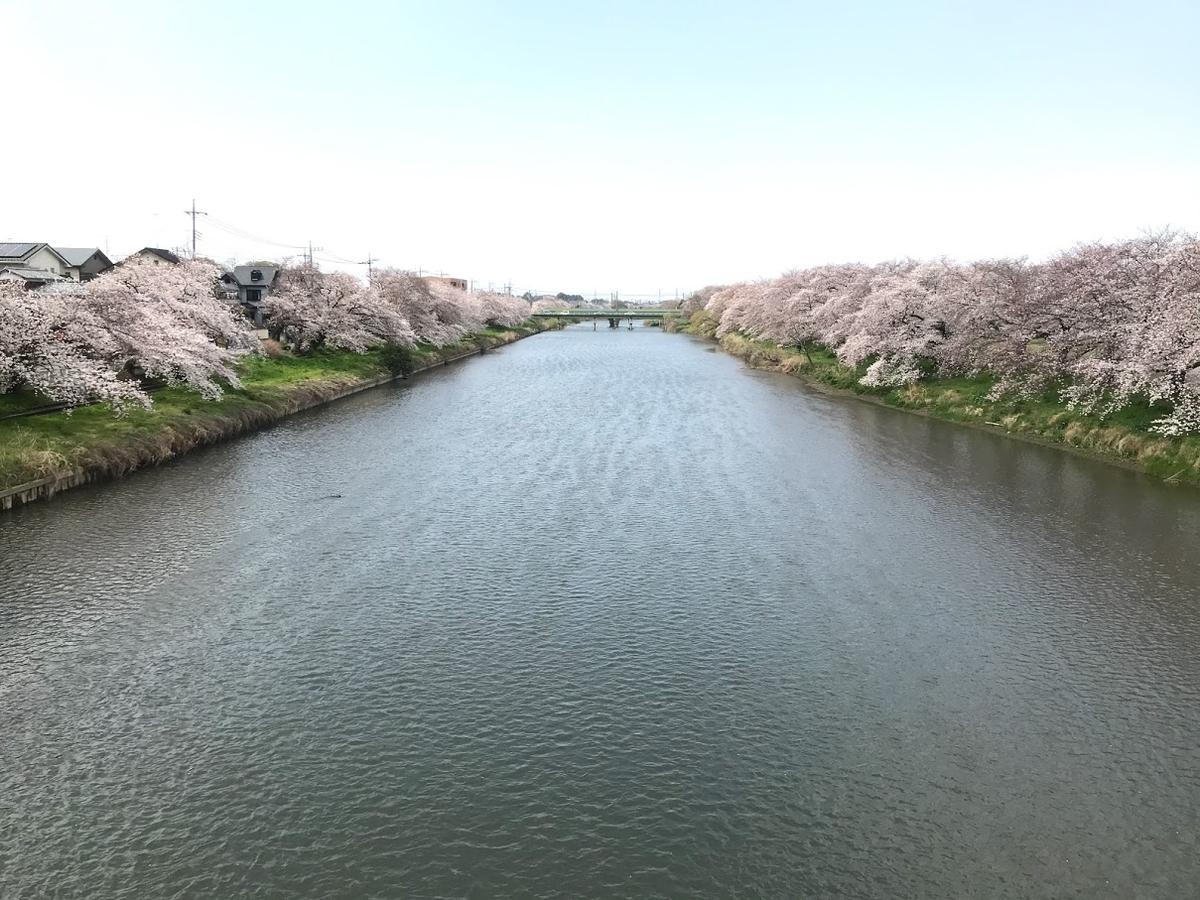 桜 4月 新しい門出