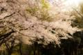 2012年4月13日 綾瀬城山公園