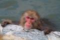 2013年2月7日 函館熱帯植物園