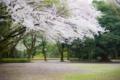 2013年3月30日 綾瀬城山公園