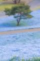 2013年4月26日 ひたち海浜公園