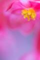 2014年2月27日 下賀茂熱帯植物園