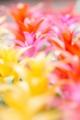 2014年8月20日 花の都公園