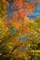2014年10月30日 西沢渓谷