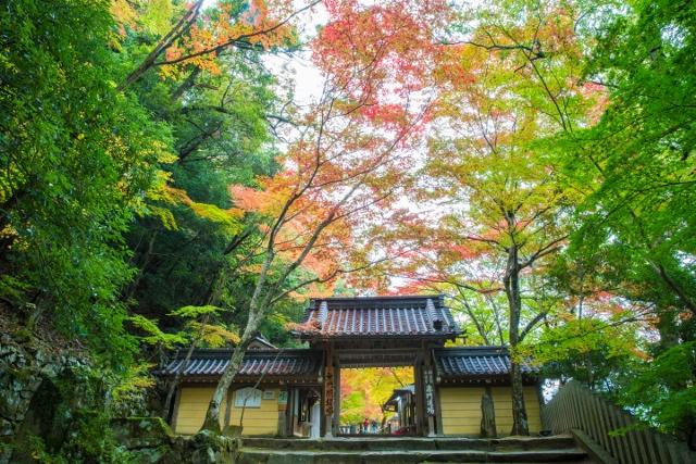 f:id:gaoyang:20141112123802j:image